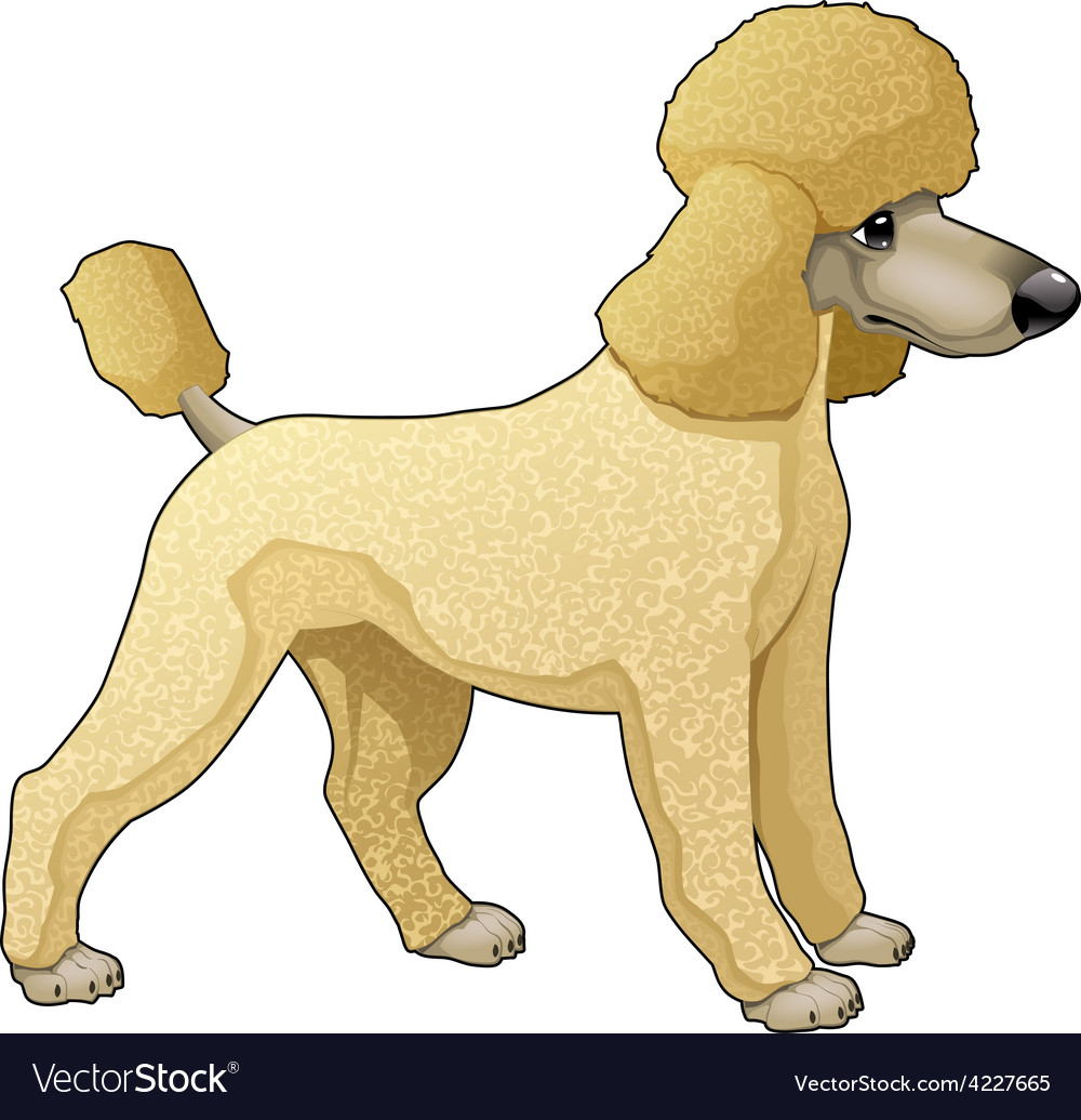 Poodle vector | Price: 3 Credit (USD $3)