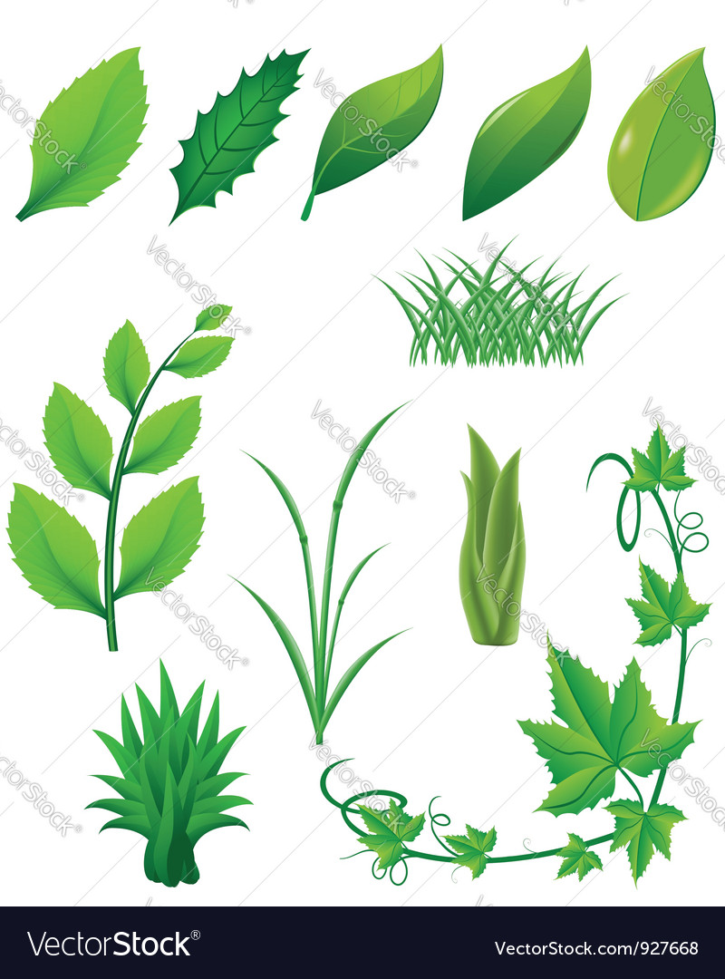 Icon set of green leaves and plants vector | Price: 3 Credit (USD $3)