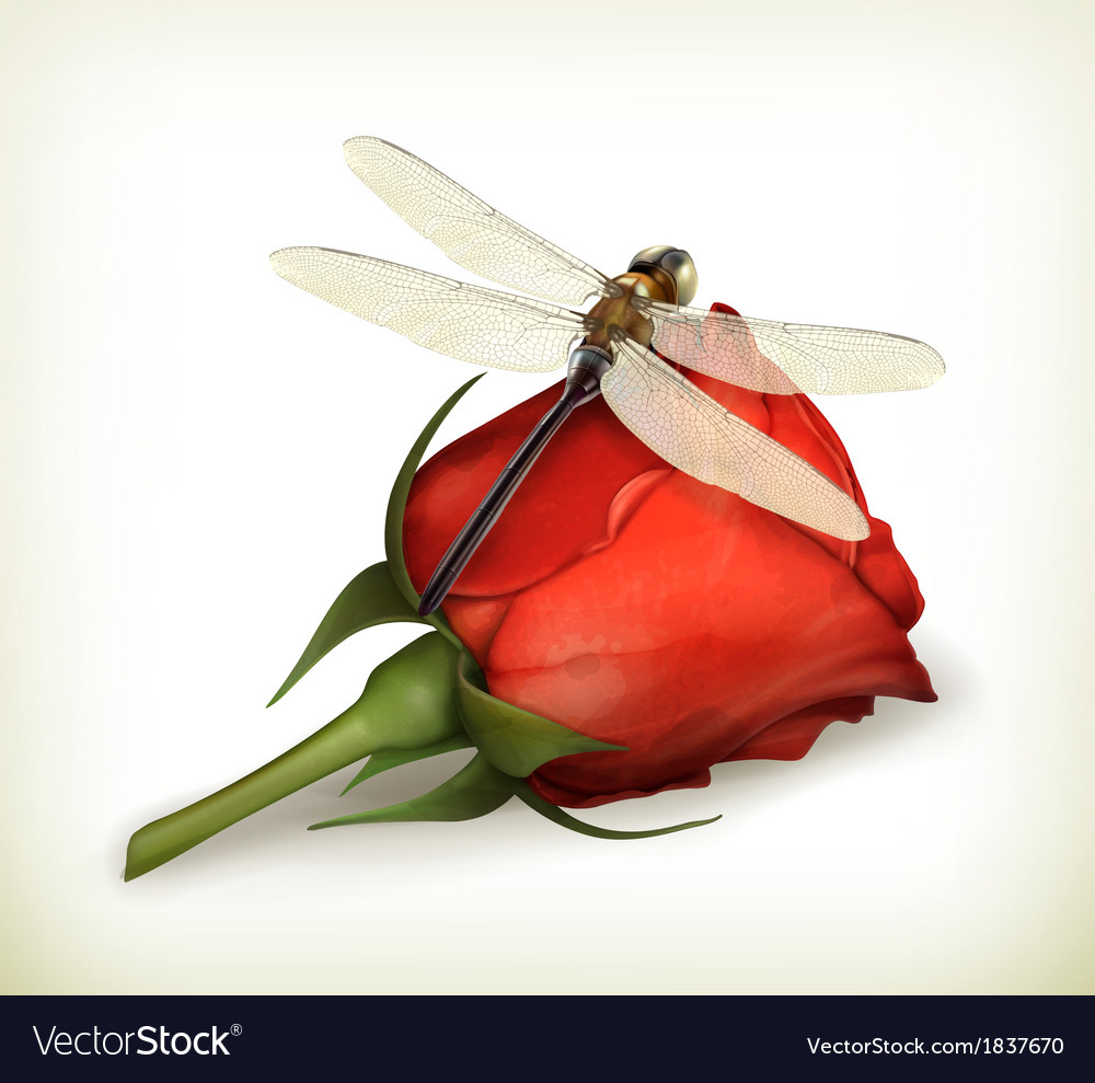 Dragonfly and rose vector | Price: 1 Credit (USD $1)