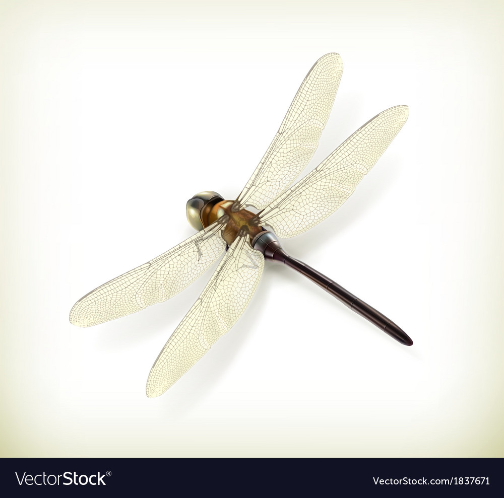 Dragonfly realistic vector | Price: 1 Credit (USD $1)
