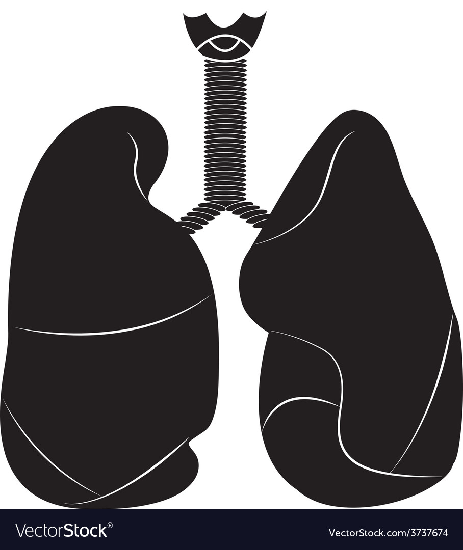 Lungs 01 vector | Price: 1 Credit (USD $1)