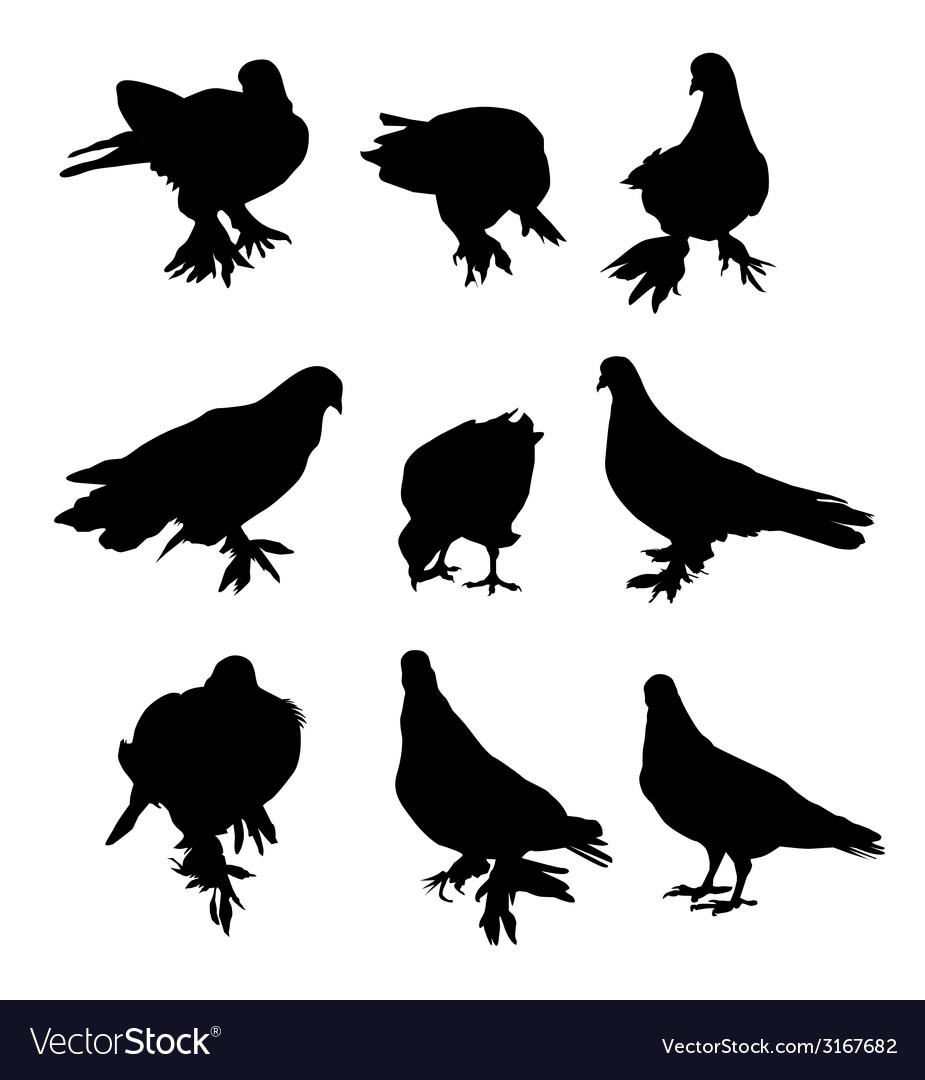 Pigeon- vector | Price: 1 Credit (USD $1)