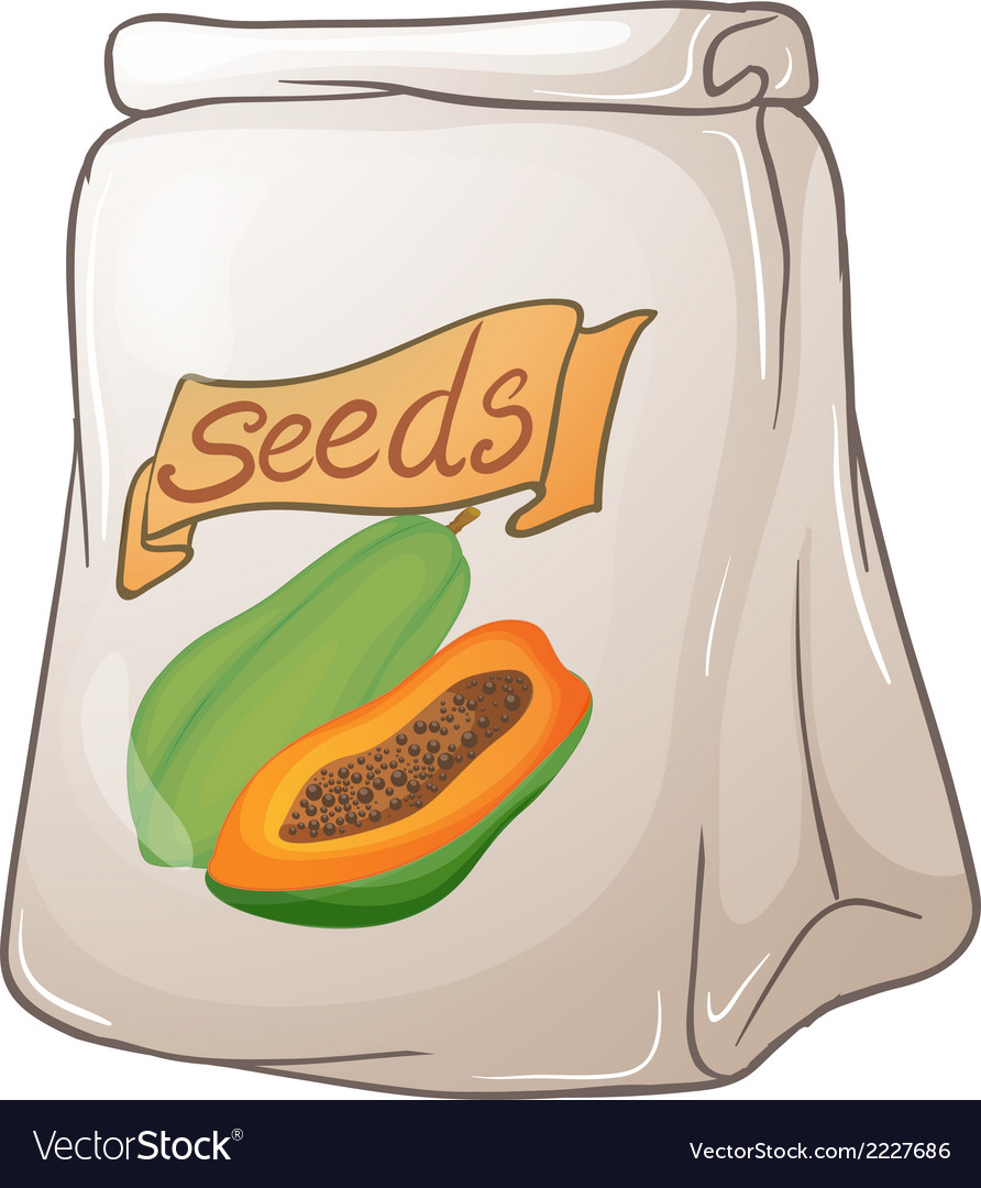 A pack of papaya seeds vector | Price: 1 Credit (USD $1)