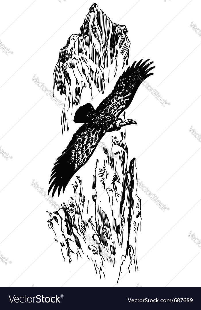 Bird griffon vulture vector | Price: 1 Credit (USD $1)