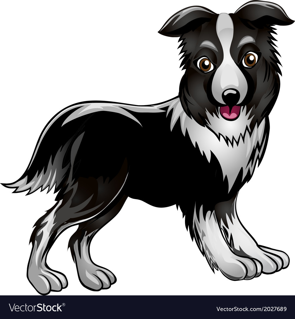 Collie vector | Price: 1 Credit (USD $1)