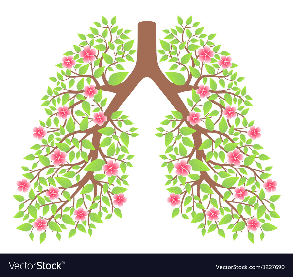 Lungs healthy vector | Price: 1 Credit (USD $1)