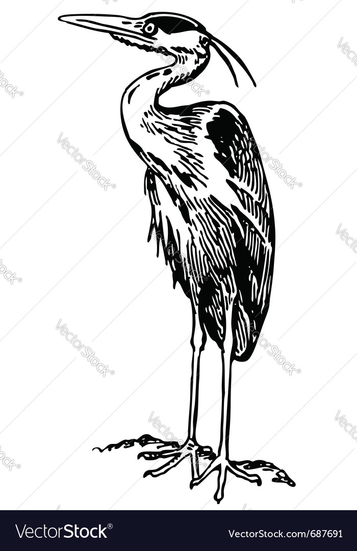 Bird grey heron vector | Price: 1 Credit (USD $1)
