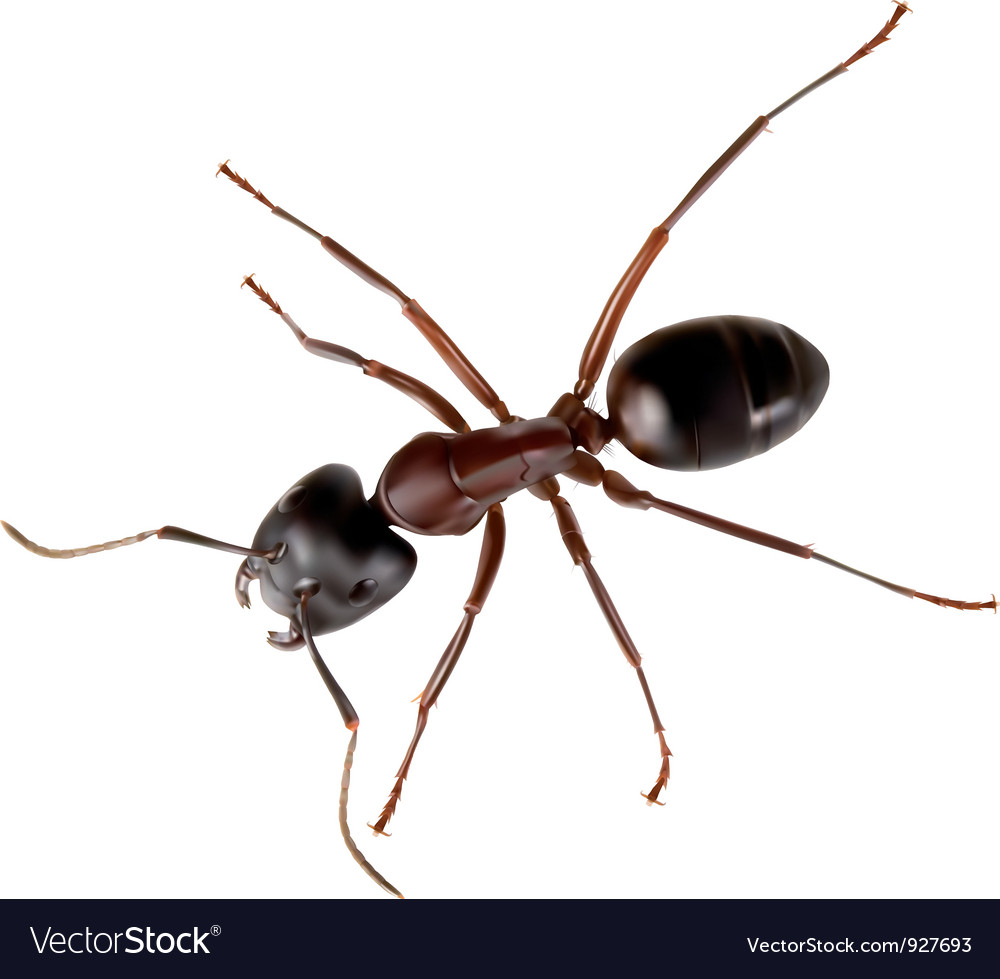 Ant vector | Price: 3 Credit (USD $3)