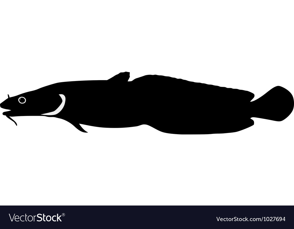 Silhouette of burbot vector | Price: 1 Credit (USD $1)