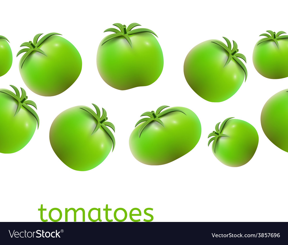 Seamless tomato background vector | Price: 1 Credit (USD $1)