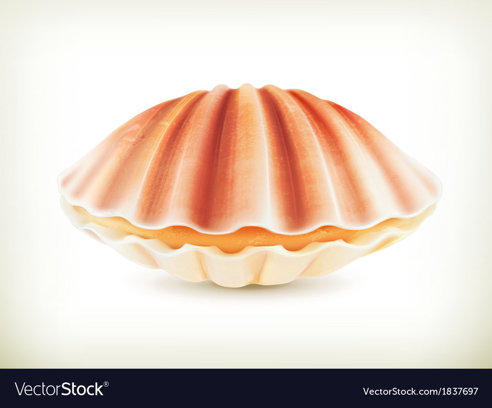Seashell high quality vector | Price: 1 Credit (USD $1)