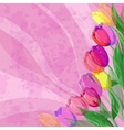 Flowers tulips on pink background vector