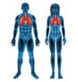 Human respiratory system vector
