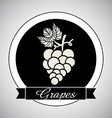 Grapes design vector