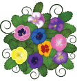 Pansies bouquet vector