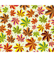 Background of fall maple leaves vector