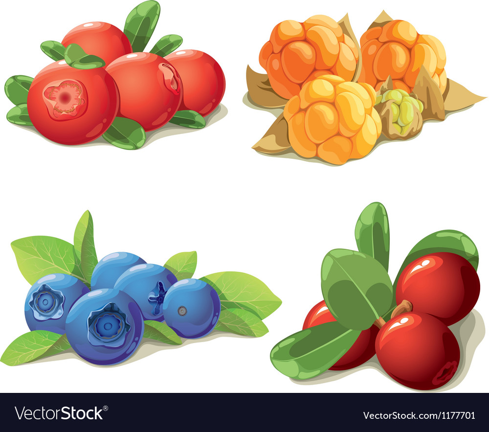 Set of mature berries vector | Price: 5 Credit (USD $5)