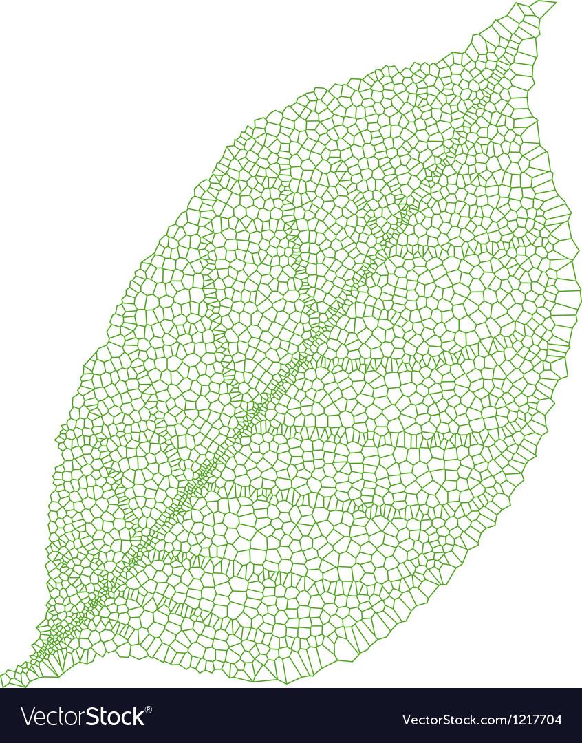 Green vein leaf vector | Price: 1 Credit (USD $1)