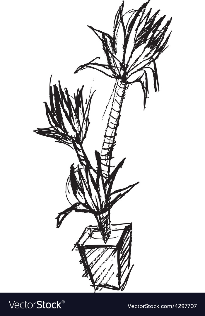 Palm tree pot hand drawing sketch vector   Price: 1 Credit (USD $1)
