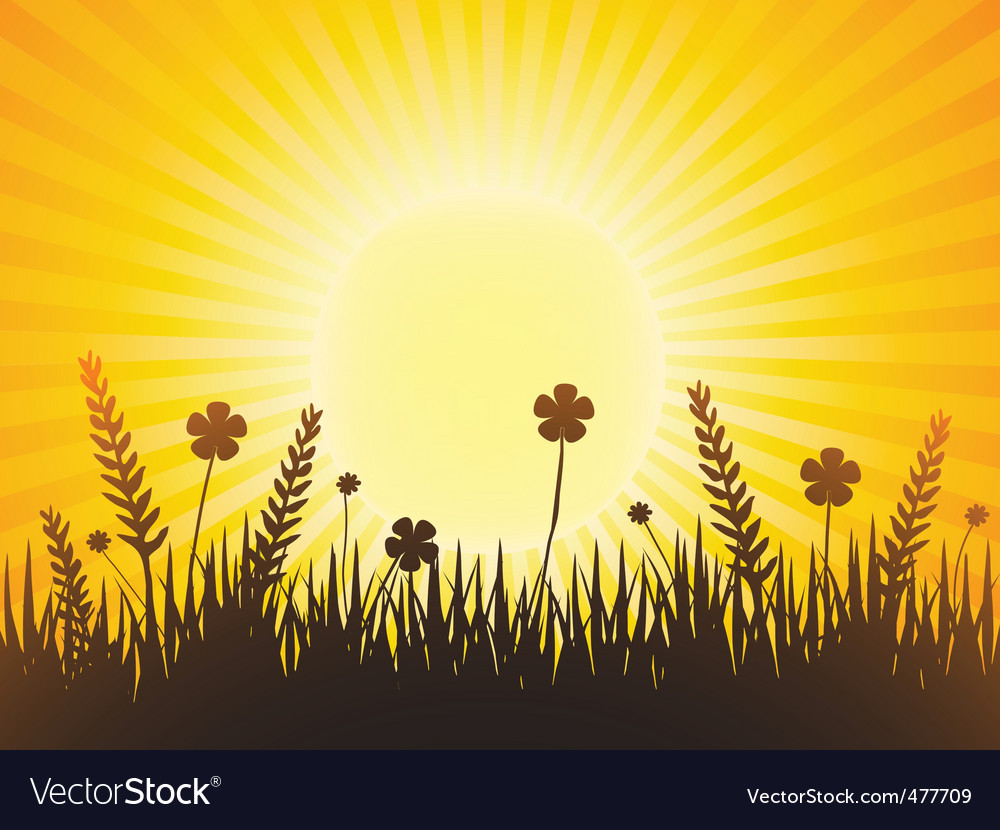 Poppy meadow with sunburst sky vector | Price: 1 Credit (USD $1)