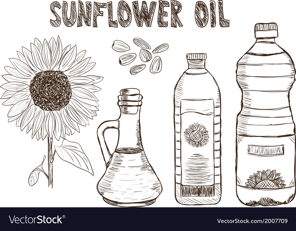 Sunflower oils drawing vector | Price: 1 Credit (USD $1)