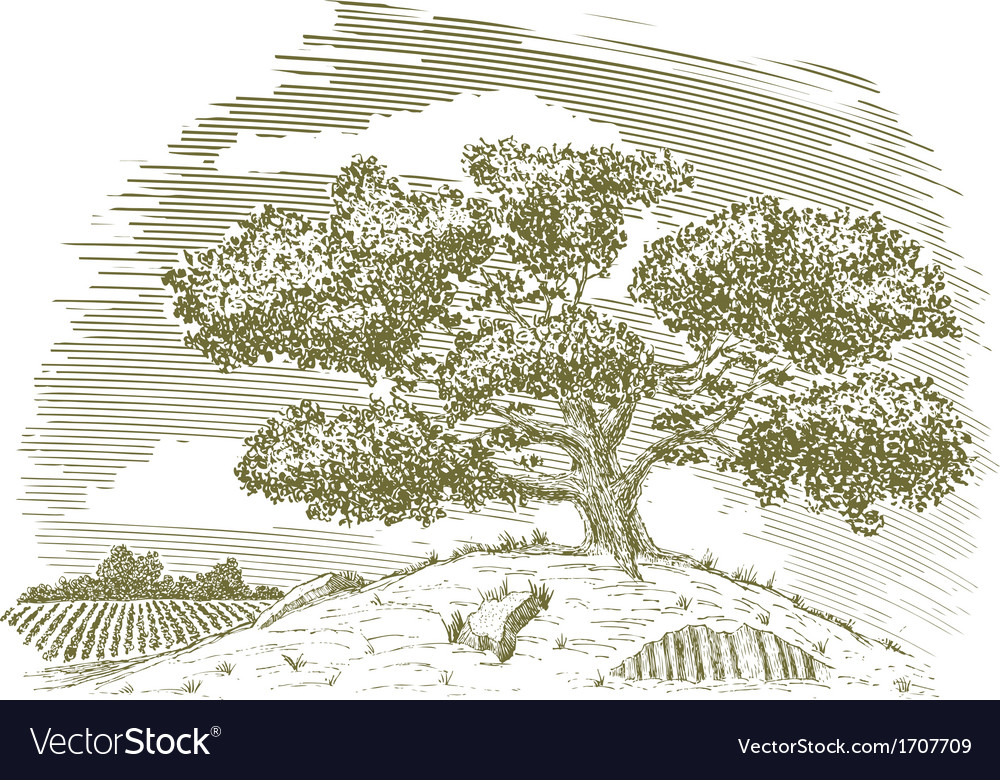 Tree on a hill drawing vector | Price: 1 Credit (USD $1)