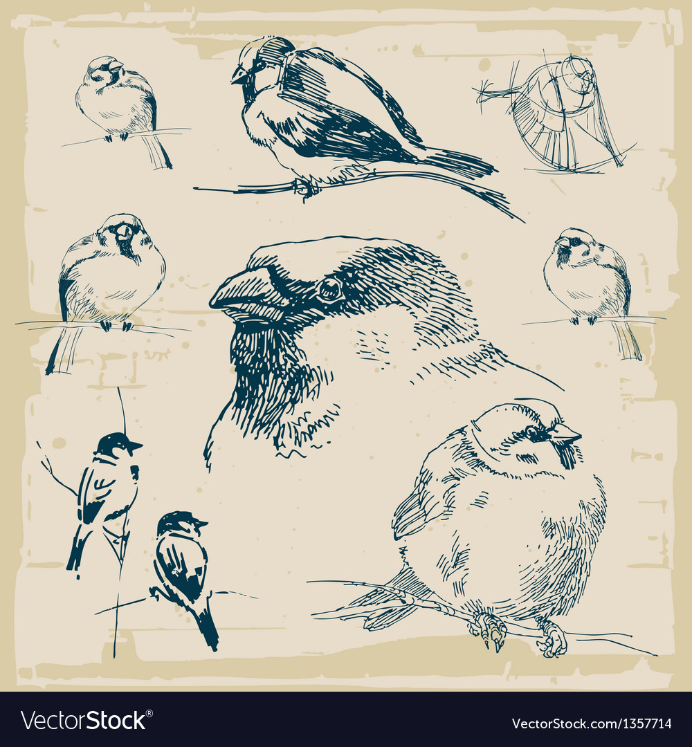 Sparrows retro collection vector | Price: 1 Credit (USD $1)