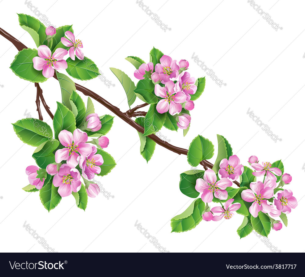 Flowering branch one vector | Price: 1 Credit (USD $1)