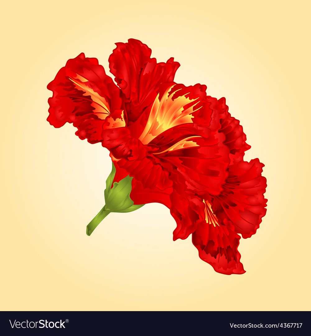 Tropical flower red hibiscus blossom simple flower vector | Price: 1 Credit (USD $1)