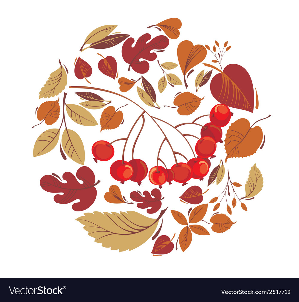 Autumn leaves with rowanberry vector | Price: 1 Credit (USD $1)