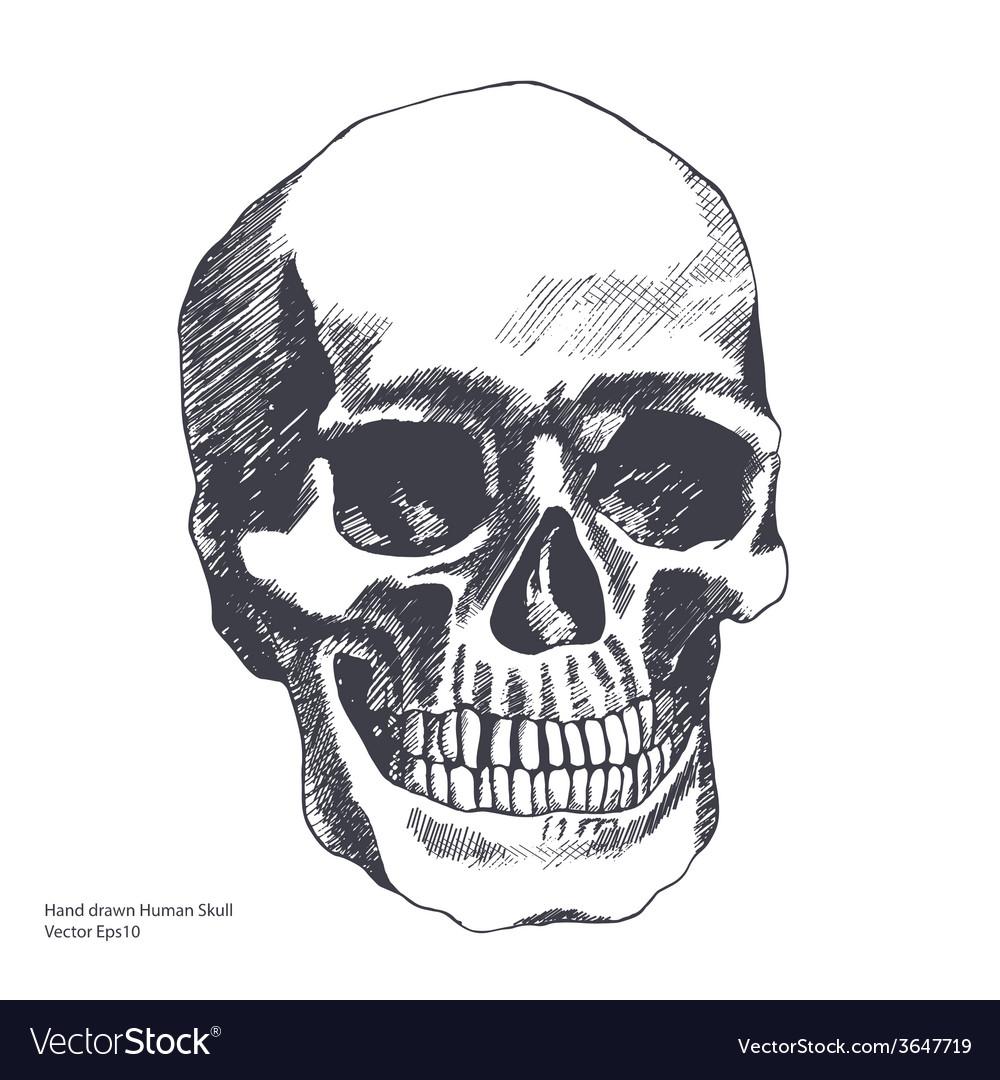 Vintage ethnic hand drawn human skull vector   Price: 1 Credit (USD $1)