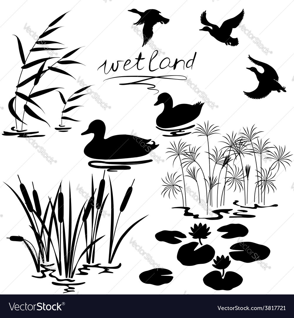Wetland set vector | Price: 1 Credit (USD $1)