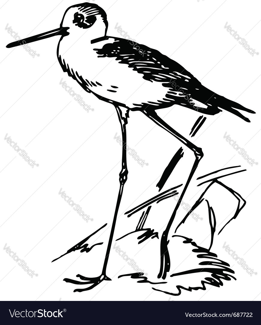 Bird black-winged stilt vector | Price: 1 Credit (USD $1)