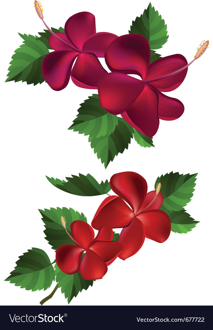 Flowers and leaves vector | Price: 1 Credit (USD $1)