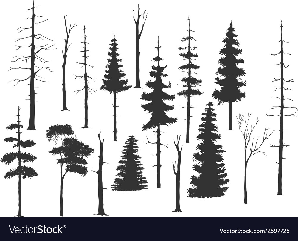 Set of the pine tree vector | Price: 1 Credit (USD $1)