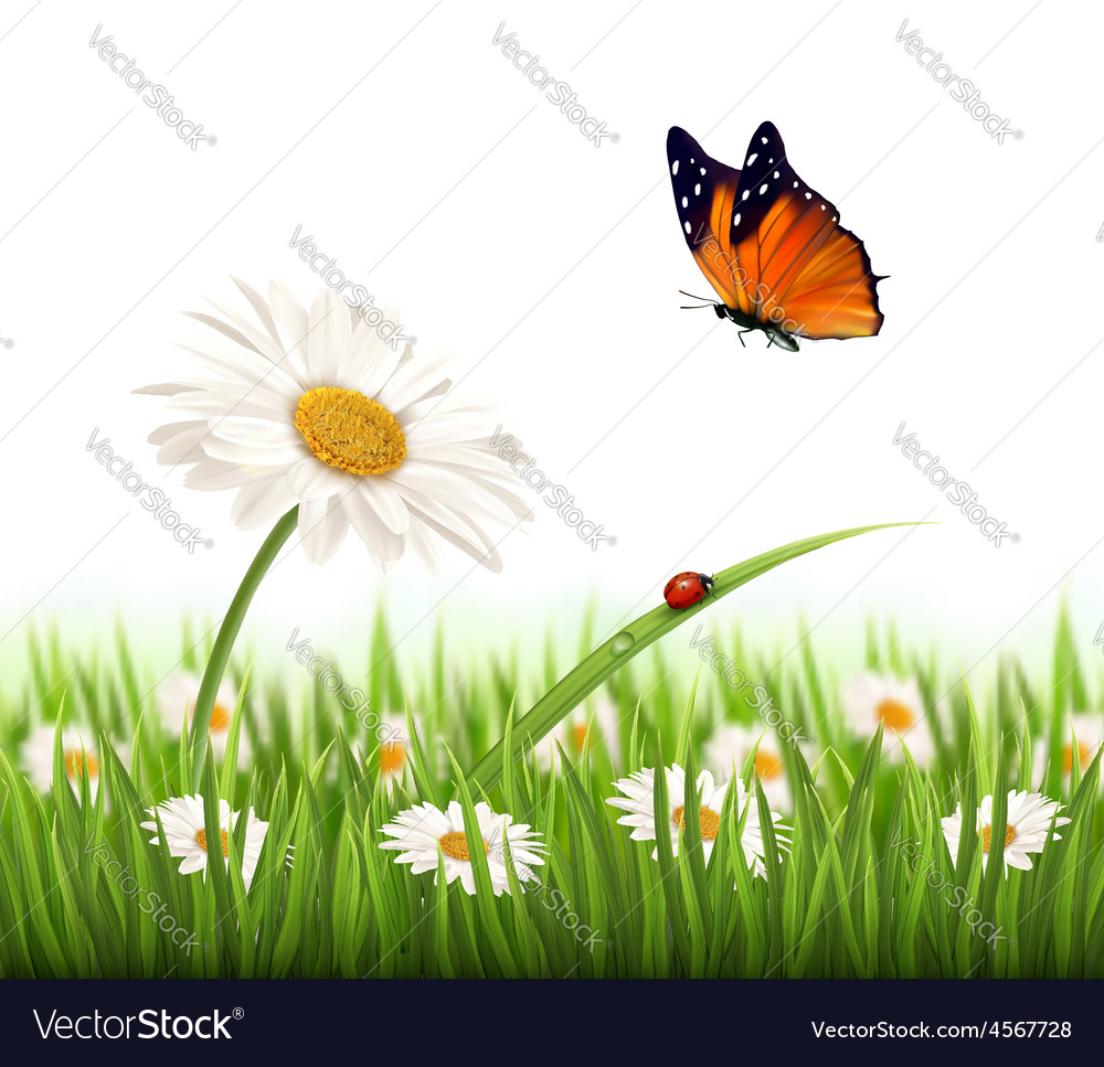 Nature summer daisy flower with butterfly vector | Price: 3 Credit (USD $3)