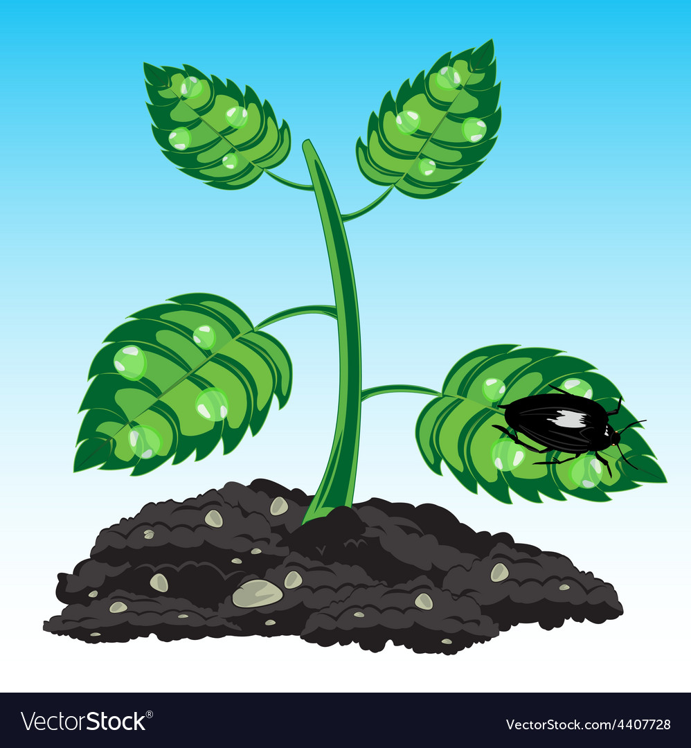 Seedling of the plant vector | Price: 1 Credit (USD $1)