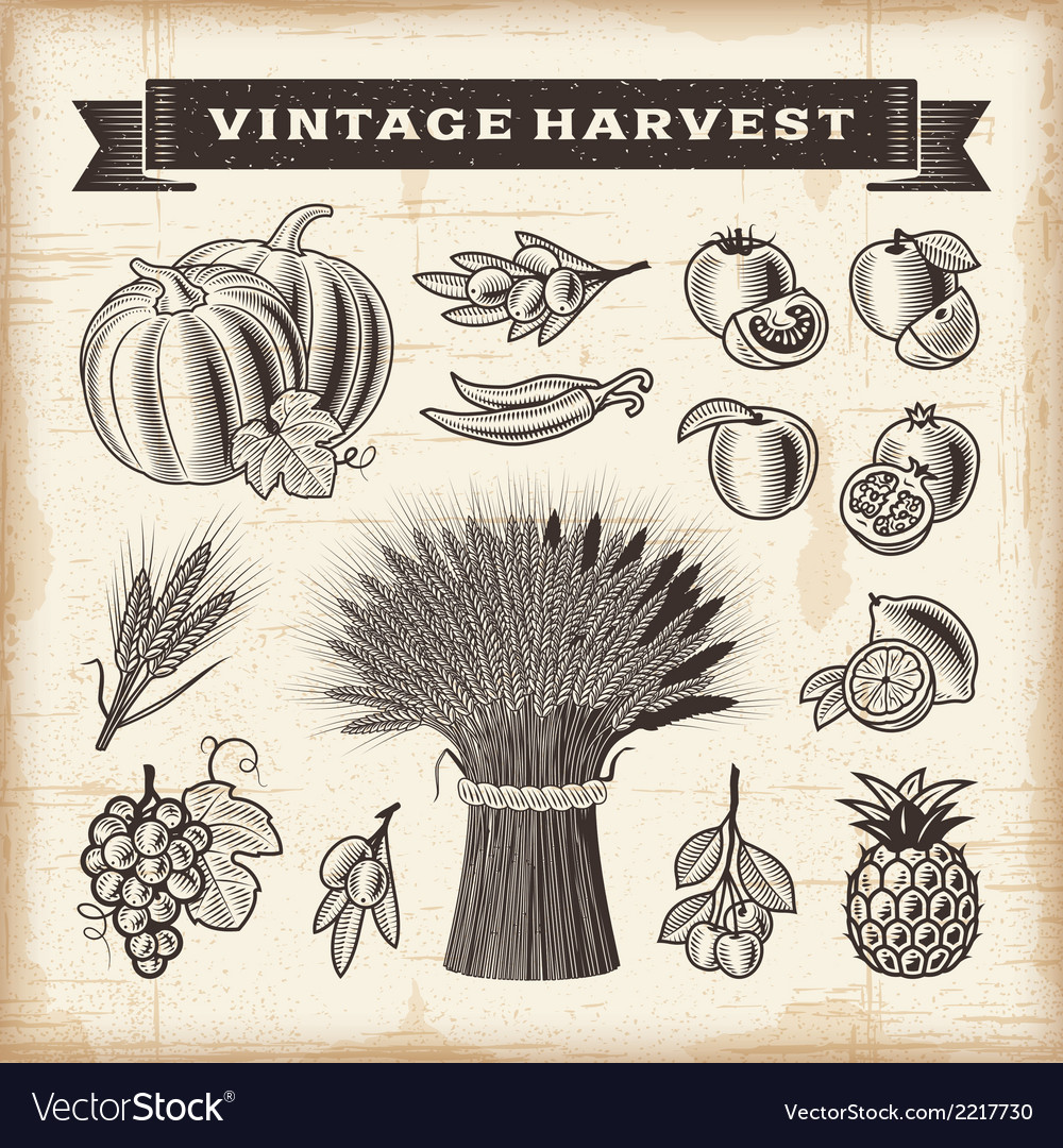 Vintage harvest set vector | Price: 1 Credit (USD $1)