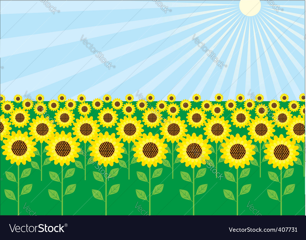 Field of sunflowers vector | Price: 1 Credit (USD $1)