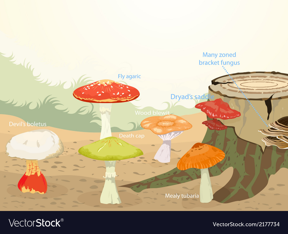 Types of mushrooms vector | Price: 1 Credit (USD $1)