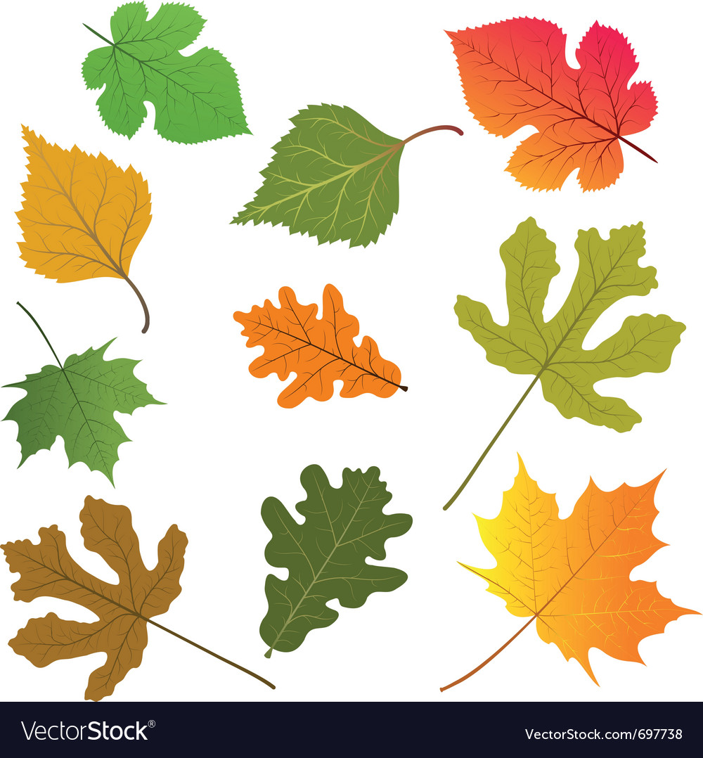 Leaves of trees vector | Price: 1 Credit (USD $1)