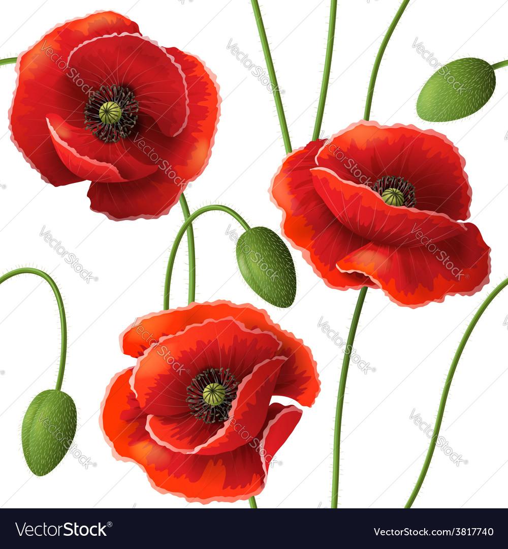 Poppy pattern vector | Price: 1 Credit (USD $1)