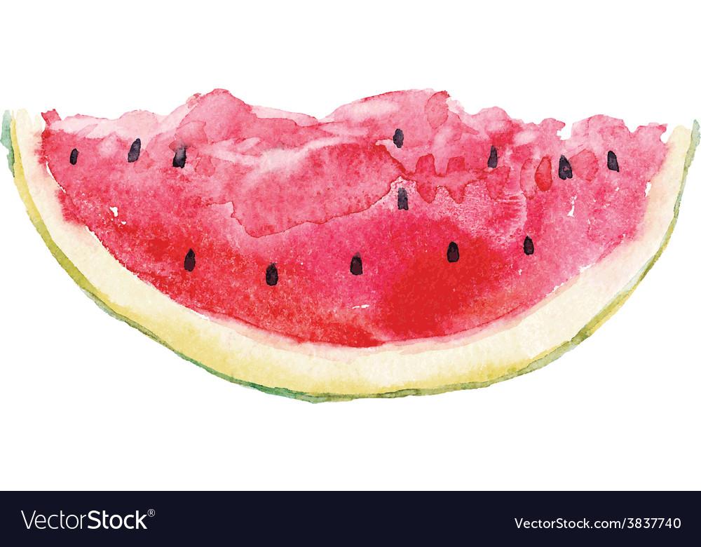Watercolor watermelon vector   Price: 1 Credit (USD $1)