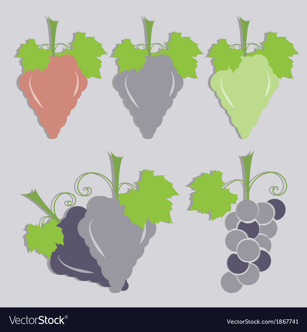 Set of grape icon vector | Price: 1 Credit (USD $1)