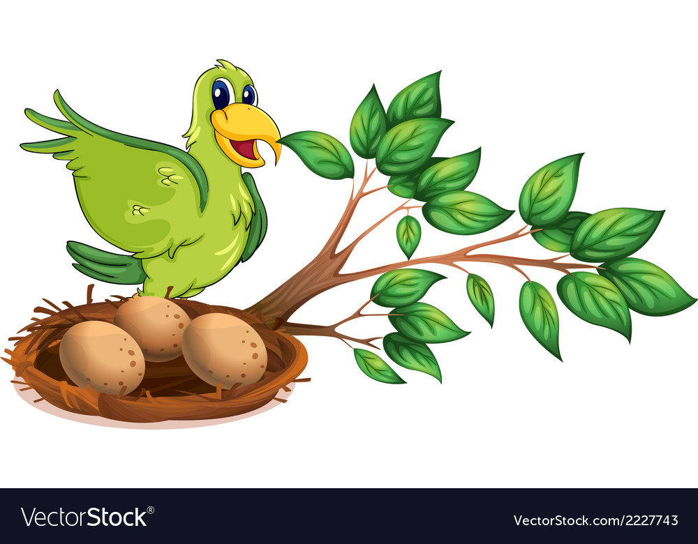 A green bird at the branch of a tree vector | Price: 1 Credit (USD $1)