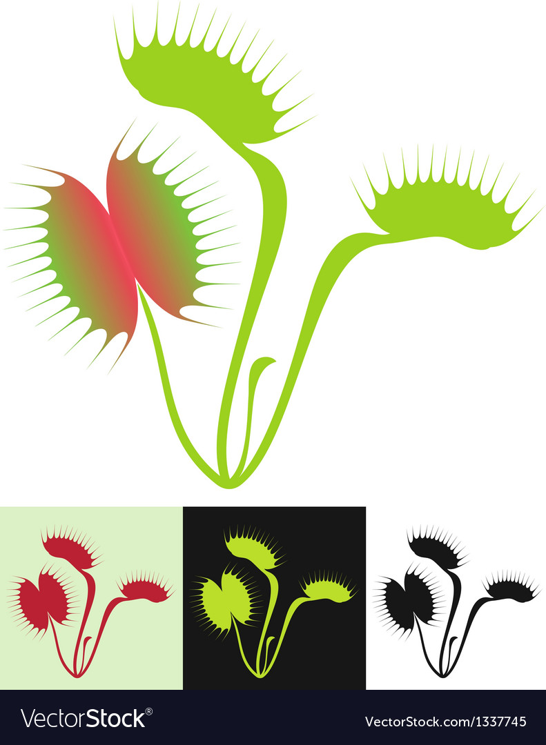 Venus flytrap vector | Price: 1 Credit (USD $1)