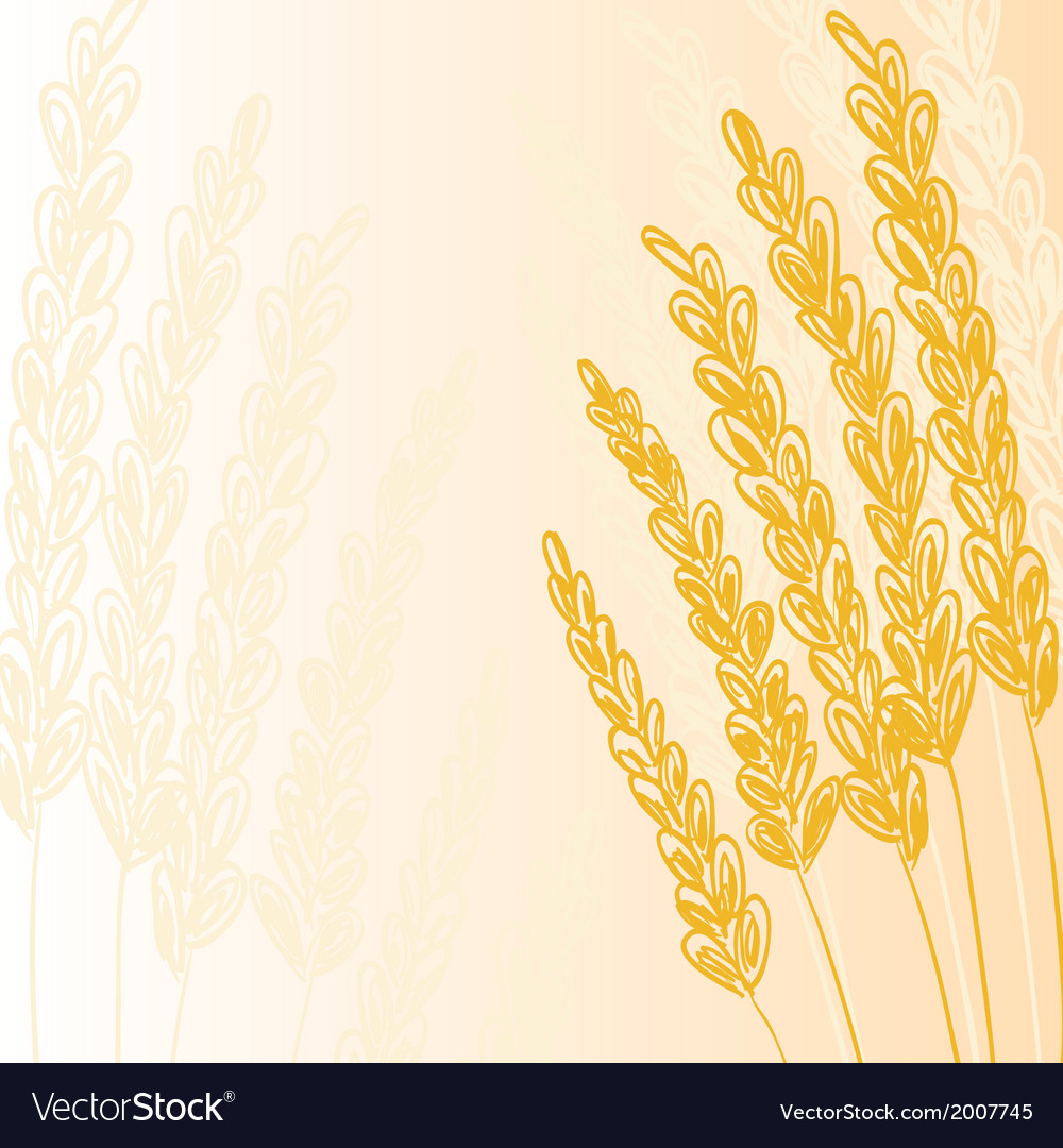 Wheat doodles background1 vector | Price: 1 Credit (USD $1)