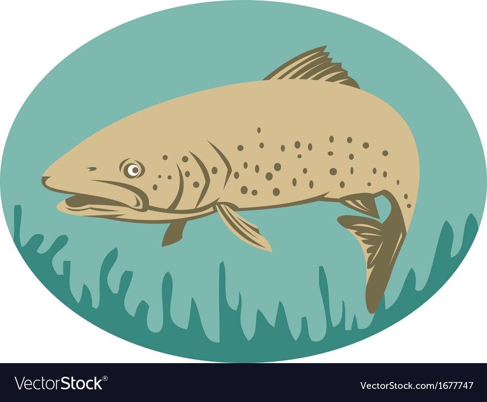 Spotted or speckled trout swimming vector | Price: 1 Credit (USD $1)