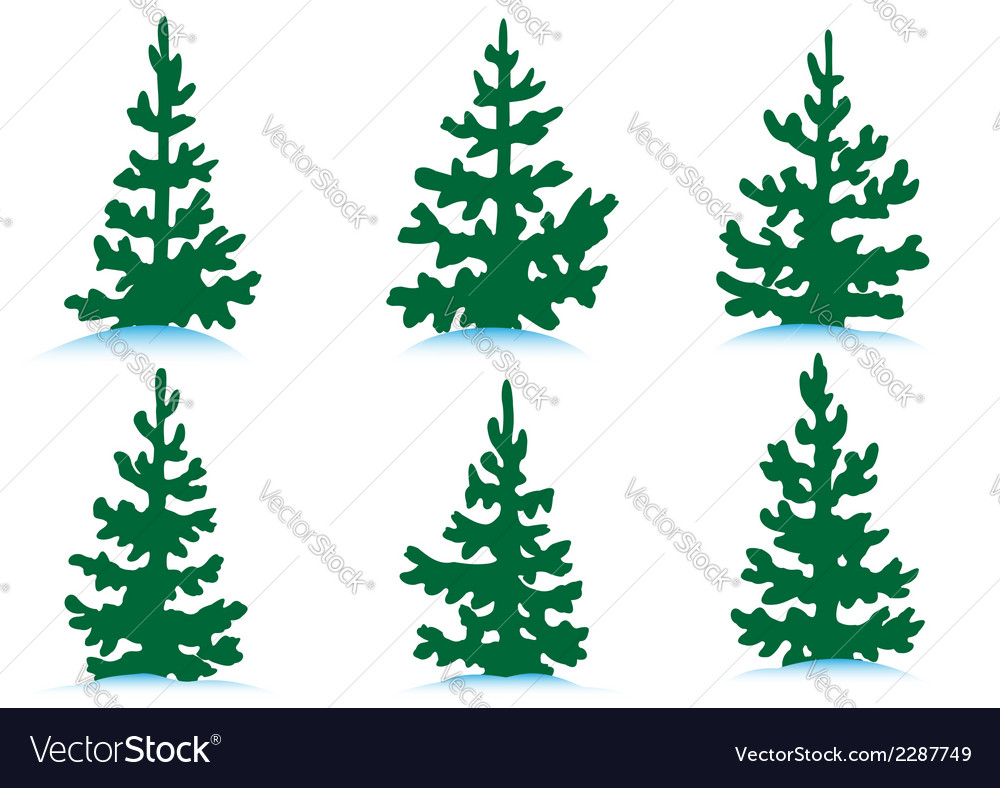 Set of firs vector | Price: 1 Credit (USD $1)