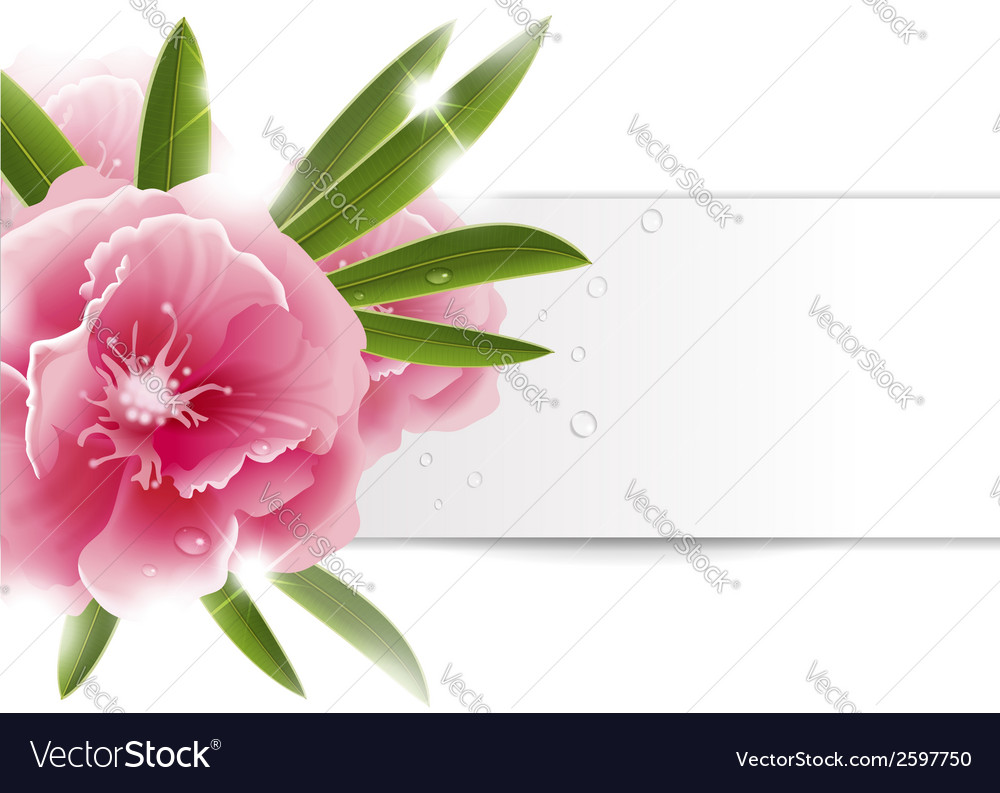 Background with pink flower vector | Price: 1 Credit (USD $1)